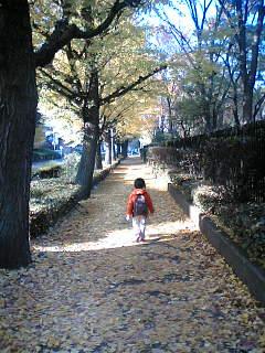 黄色のじゅうたんの道